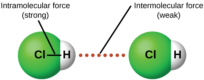 """An image is shown in which two molecules composed of a green sphere labeled """"C l"""" connected on the right to a white sphere labeled """"H"""" are near one another with a dotted line labeled """"Intermolecular force ( weak )"""" drawn between them. A line connects the two spheres in each molecule and the line is labeled """"Intramolecular force ( strong )."""""""