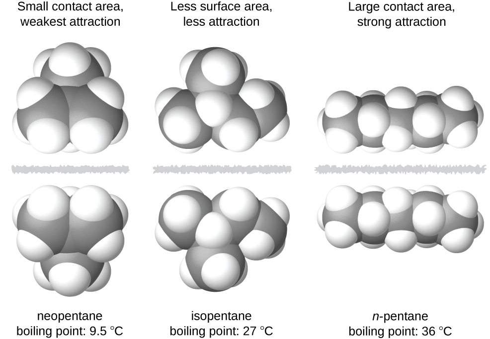 """Three images of molecules are shown. The first shows a cluster of large, gray spheres each bonded together and to several smaller, white spheres. There is a gray, jagged line and then the mirror image of the first cluster of spheres is shown. Above these two clusters is the label, """"Small contact area, weakest attraction,"""" and below is the label, """"neopentane boiling point: 9.5 degrees C."""" The second shows a chain of three gray spheres bonded by the middle sphere to a fourth gray sphere. Each gray sphere is bonded to several smaller, white spheres. There is a jagged, gray line and then the mirror image of the first chain appears. Above these two chains is the label, """"Less surface area, less attraction,"""" and below is the label, """"isopentane boiling point: 27 degrees C."""" The third image shows a chain of five gray spheres bonded together and to several smaller, white spheres. There is a jagged gray line and then the mirror image of the first chain appears. Above these chains is the label, """"Large contact area, strong attraction,"""" and below is the label, """"n-pentane boiling point 36 degrees C."""""""
